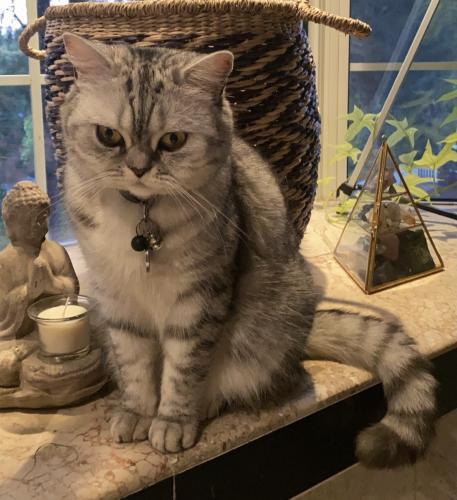 Lost Female Cat last seen Taft high school, Los Angeles, CA 91364