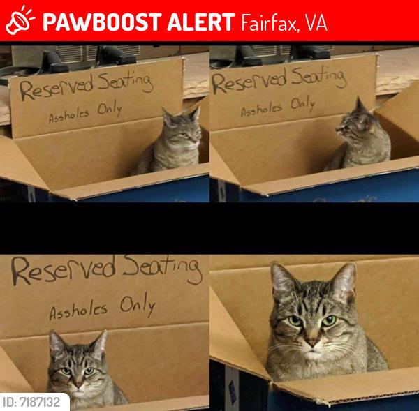 Lost Male Cat last seen Allison Circle and Maple Street Fairfax, Fairfax, VA 22032