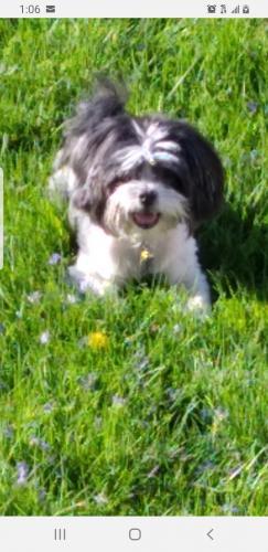 Lost Male Dog last seen 70th Racine, Chicago, IL 60621