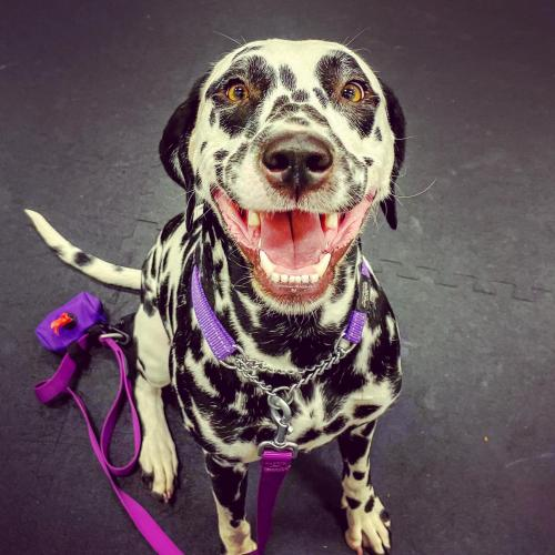 Lost Female Dog last seen Little York & Foy, Houston, TX 77093