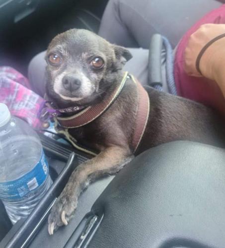Lost Male Dog last seen Avalon, Los Angeles, CA 90002
