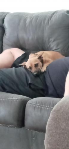 Lost Female Dog last seen Yancey road, Covington, GA 30014
