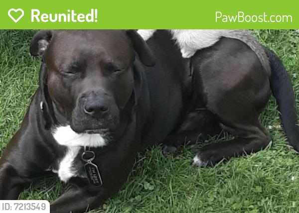 Reunited Male Dog last seen Near west red arrow highway paw paw Michigan, Paw Paw, MI 49079