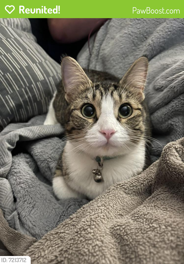 Reunited Female Cat last seen Near 134a street , Surrey, BC V3V 5T3