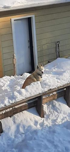 Lost Female Dog last seen Near Miller Ave. South Chicago Hts., Il, South Chicago Heights, IL 60411
