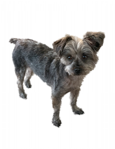 Lost Male Dog last seen Exposition Blvd & 6th Avenue , Los Angeles, CA 90018