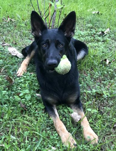 Lost Female Dog last seen Rockwell Church road at Moon Bridge Road, Winder, GA, USA, Barrow County, GA 30680