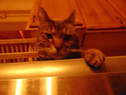 Lost Male Cat last seen Near Bessley Place, Alexandria, VA, USA, Alexandria, VA 22304