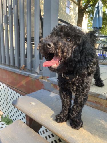 Lost Male Dog last seen Near Camelback Lane, Aspen Hill, MD, USA, Aspen Hill, MD 20906