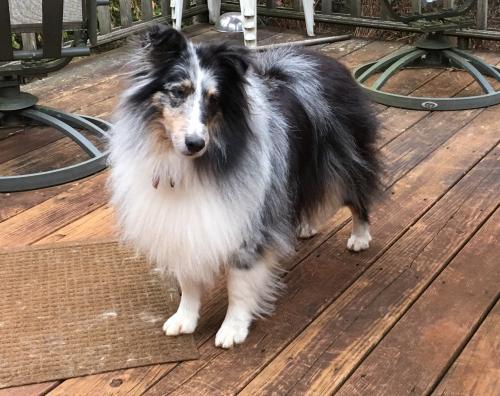 Lost Female Dog last seen Camelot, Spartanburg, SC 29301, USA, Spartanburg, SC 29301