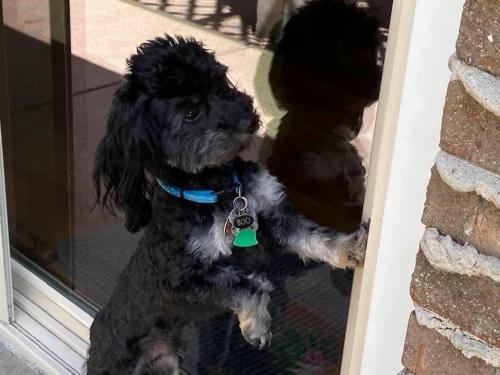 Lost Male Dog last seen 192nd Parker Rd New Lenox twp , New Lenox Township, IL 60451