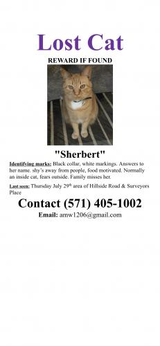 Lost Female Cat last seen Hillside Road, West Springfield, VA, USA, West Springfield, VA 22152
