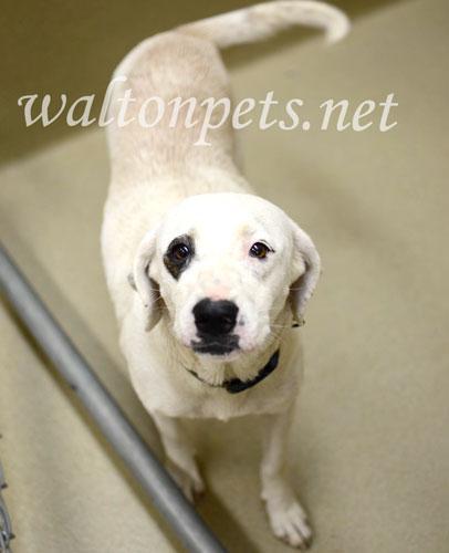 Found/Stray Female Dog last seen South Madison Avenue, Monroe, GA, USA, Monroe, GA 30655