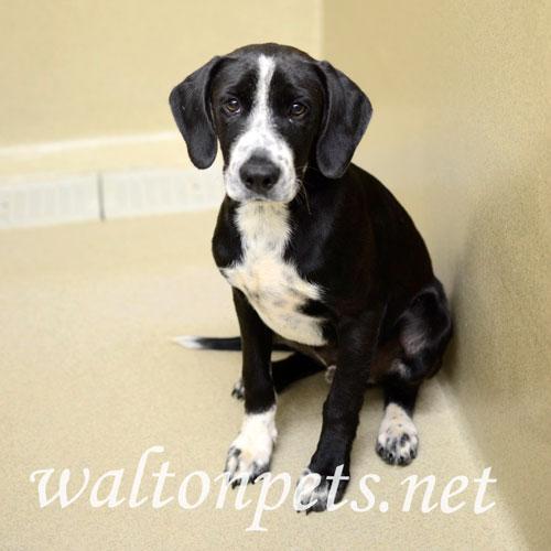 Found/Stray Male Dog last seen Blasingame Road, Monroe, GA, USA, Monroe, GA 30655