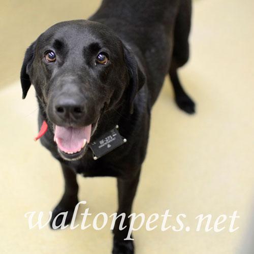 Found/Stray Male Dog last seen Rivermist Drive, Monroe, GA, USA, Monroe, GA 30655