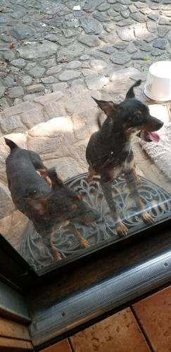 Found/Stray Male Dog last seen Cooks Bridge Rd, Fountain Inn, SC, USA, Laurens County, SC 29644