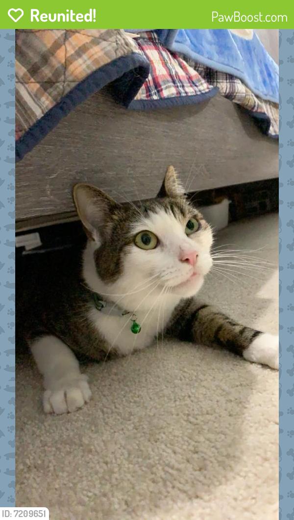 Reunited Female Cat last seen Near Fairfax Blvd, Fairfax, VA 22030
