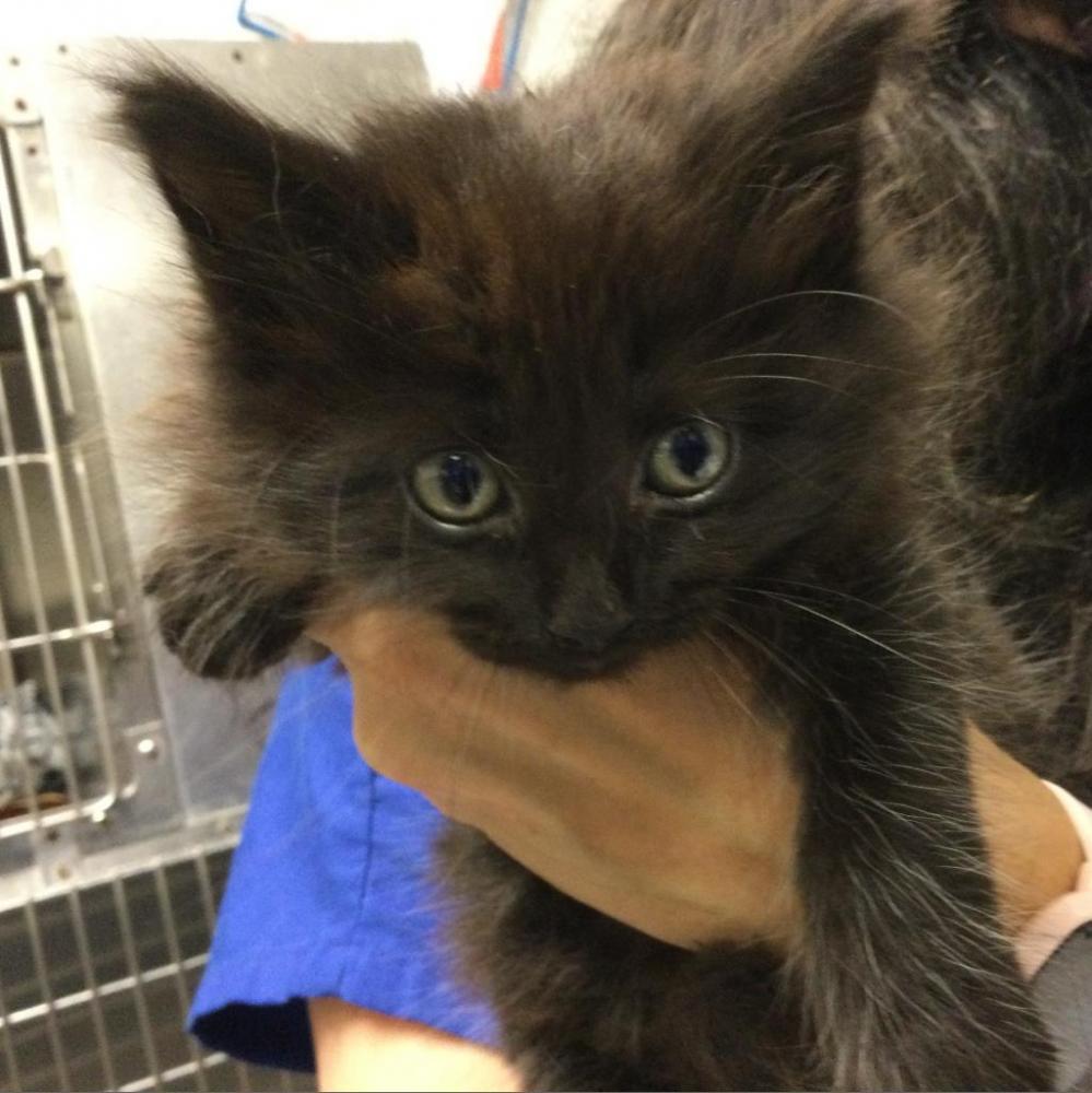 Shelter Stray Unknown Cat last seen , Greenville, SC 29601