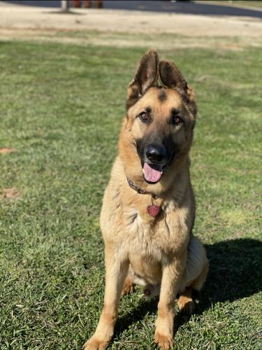 Lost Male Dog last seen Old Furnace Road, Boiling Springs, SC, USA, Boiling Springs, SC 29316