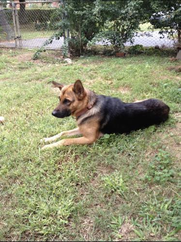 Lost Female Dog last seen Bishop Road, Inman, SC, USA, Inman, SC 29349