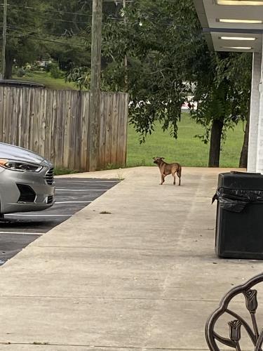 Found/Stray Female Dog last seen Near E North St, Greenville, SC, USA, Greenville, SC 29607