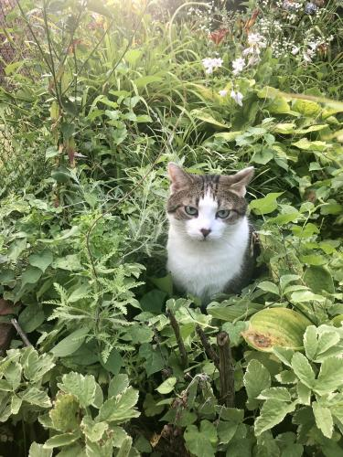Lost Male Cat last seen Near Block 9th Street, NW, Washington, DC 20011
