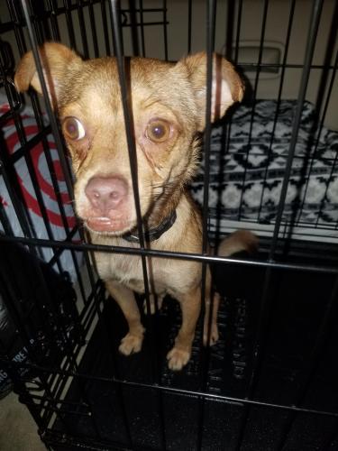 Found/Stray Male Dog last seen Hiram Clarke Road, Houston, TX, USA, Houston, TX 77045