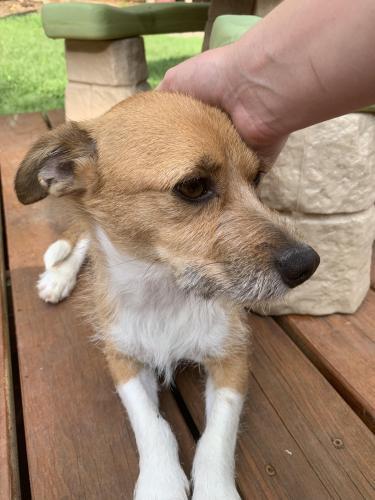 Found/Stray Unknown Dog last seen East Butler Road & Holland Road, Mauldin, SC, USA, Mauldin, SC 29607