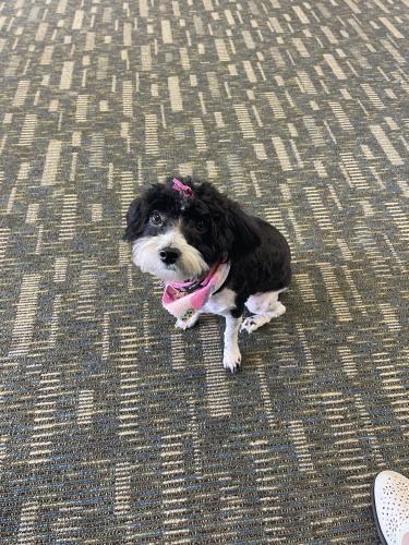 Lost Female Dog last seen Lywellen Drive, Stone Mountain, GA, USA, DeKalb County, GA 30087