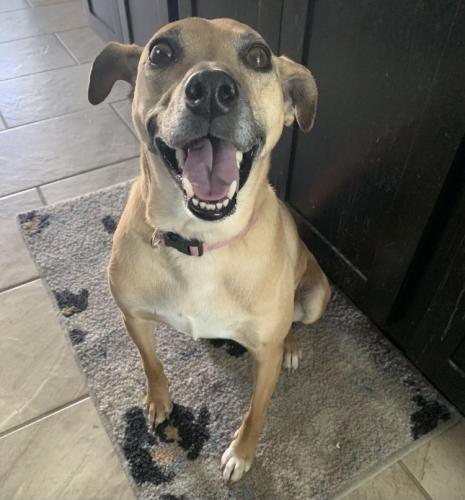 Lost Female Dog last seen Plantation Colony, Sugar Land, TX, USA, Sugar Land, TX 77478