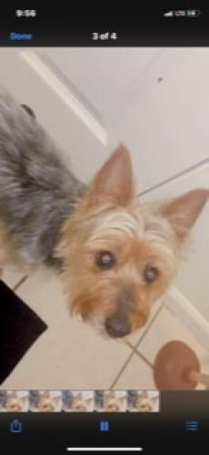 Lost Male Dog last seen Near South Aberdeen Street, Chicago, IL, USA, Chicago, IL 60643