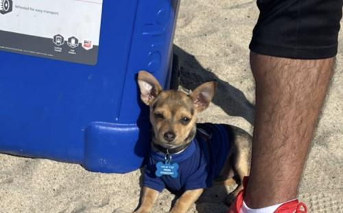 Lost Male Dog last seen E Martin Luther King Jr Blvd, Los Angeles, CA, USA, Los Angeles, CA 90011