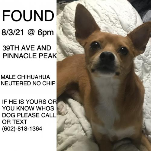 Found/Stray Male Dog last seen North 39th Drive & West Pinnacle Peak Road, Phoenix, AZ, USA, Phoenix, AZ 85310