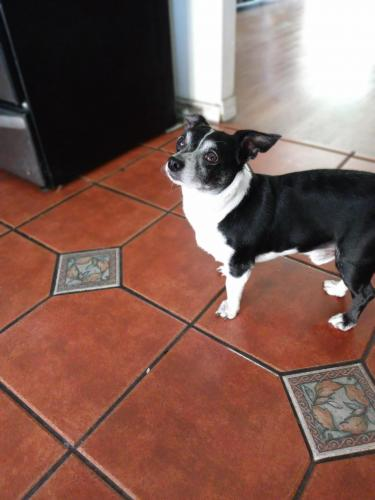 Lost Male Dog last seen W ball rd and Empire st, Anaheim, CA 92804