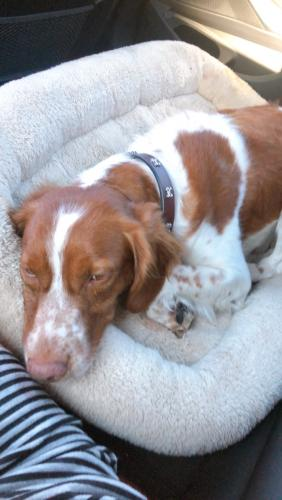 Found/Stray Female Dog last seen Near 4th Avenue, los angeles, ca , Los Angeles, CA 90019