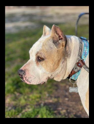 Lost Female Dog last seen Friendly Dr, Salem, SC, USA, Salem, SC 29676